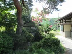 樹齢200年の松