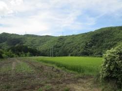 現地からの里山と田園風景