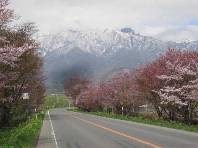 桜色の富良野