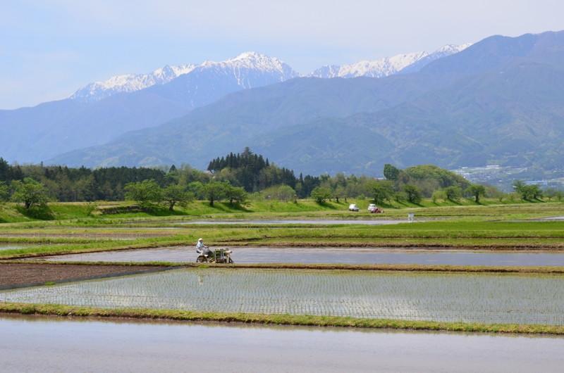 三峰川沿い田園風景