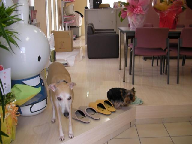 shop_32401_2.jpg